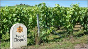 Love and champagne vineyard